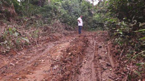 Strasse, über die Holzdiebe illegal Holz- aus indigenem Gebiet abtransportieren. © Martin Keßler